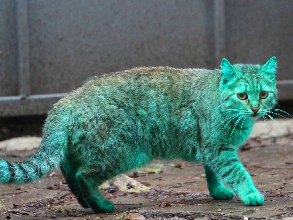 green-cat-6
