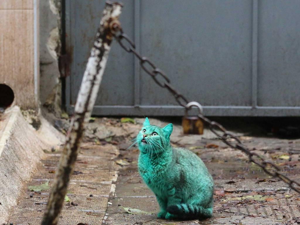 green-cat-7